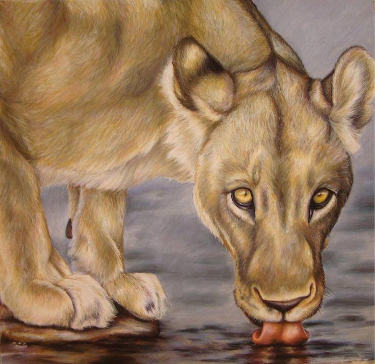Lioness drinking water - Pastel on Paper Artist: Ellenor Hastie