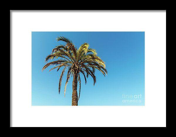 Green Palm Tree On Blue Sky Framed Print