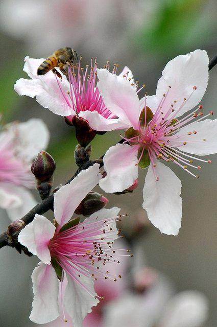 Seeing as I'm a Georgia Peach, why not a peach blossom bridal bouquet?