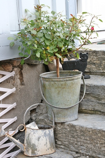 Plant a big plant in that rusty coffee pot with the hole in the bottom. Place onto the ground or in a bed and it will develop a tap root.