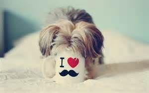 Funny Dog Sayings - Bing Images