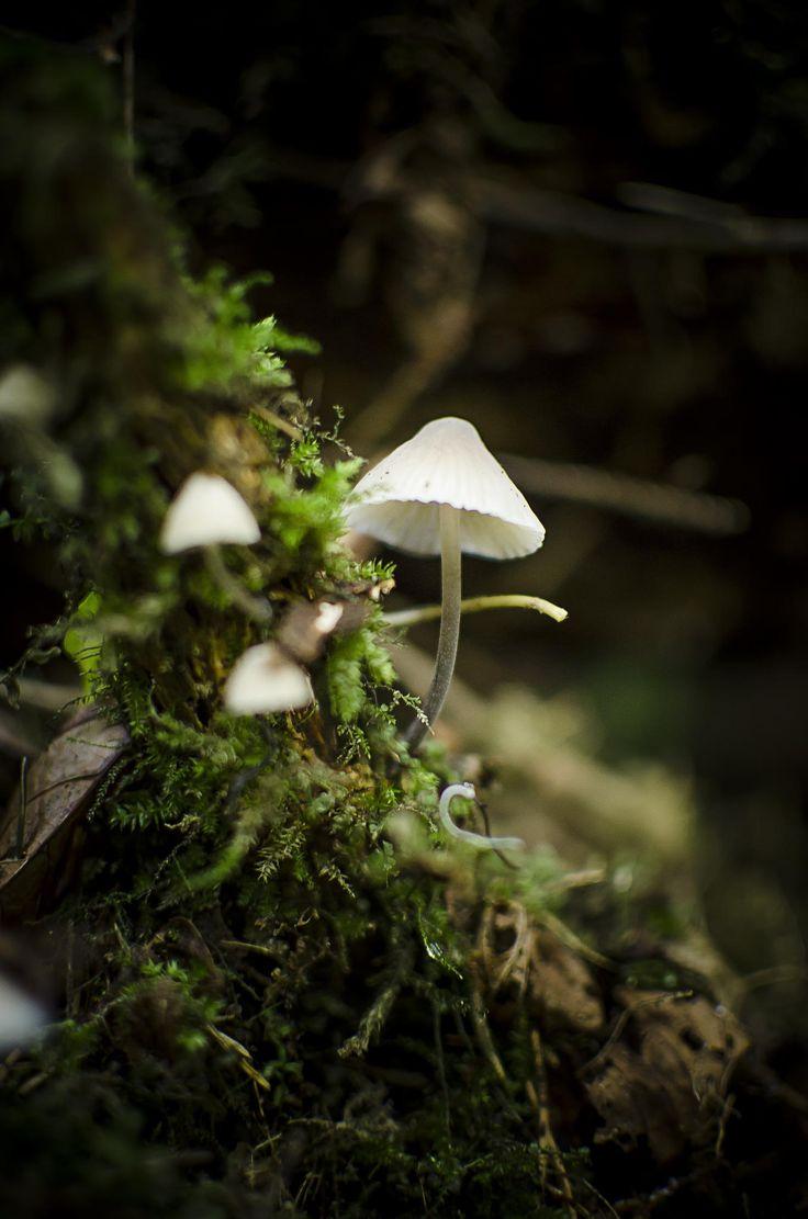 mushroom dream by Ionut Vicol on 500px