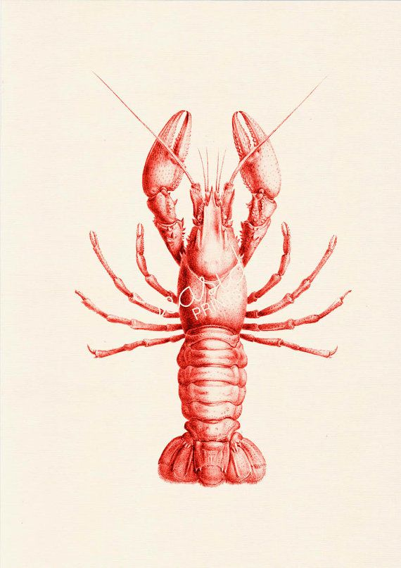 Red Lobster sea life printModern beach art by seasideprints
