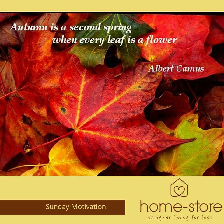 """""""Autumn is a second spring when every leaf becomes a flower."""" - Albert Camus. As the temperatures drop towards winter we can draw comfort from the warm colours of Autumn. #inspiration #motivation"""