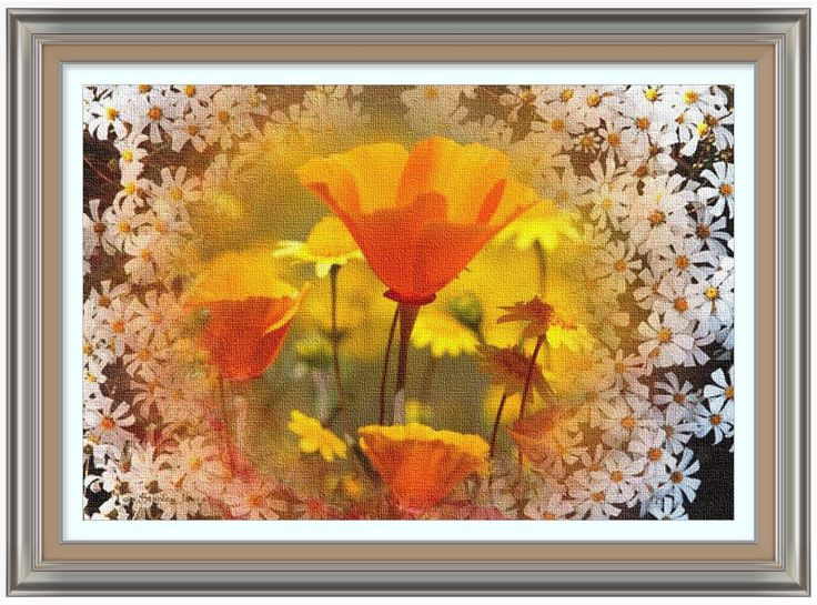 Vivid Californian Poppies framed with wild white daisies.