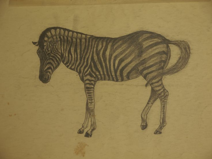 Zebra drawn pencil during my teens.