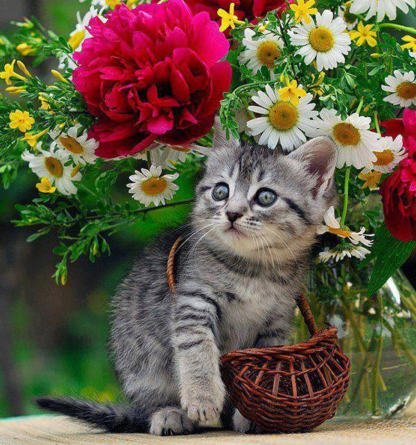 Кошки открытки красивые, три месяца ребенку