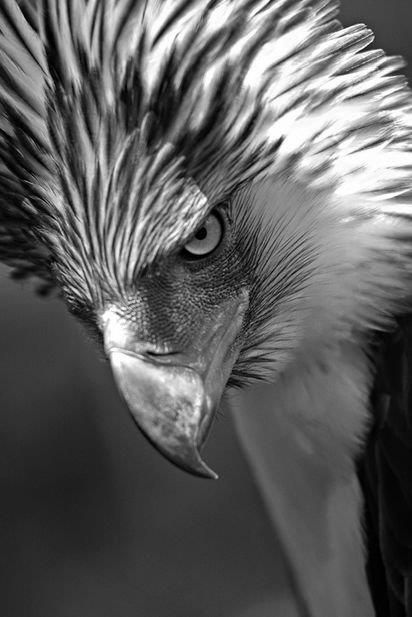 Best Black And White Nature Photography Images On Pinterest - Powerful and intimate black white animal portraits by luke holas
