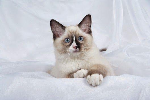 Brylant Biały - nowy żwirek dla kotów