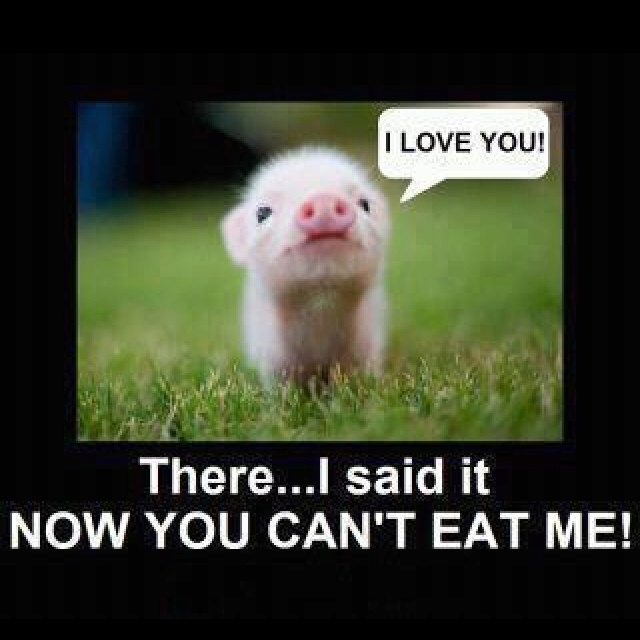 This is why I don't eat pig! Look at that little face.....