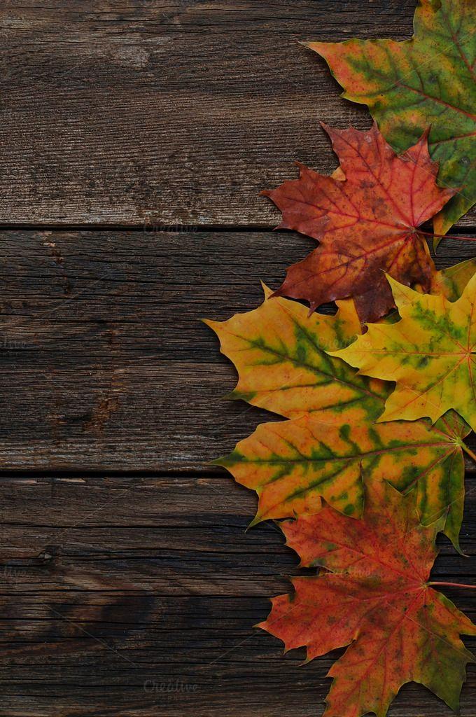 Autumn background by Yulia Furman on @creativemarket