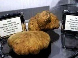 Italian White Alba Truffle – $160,406  Expensive truffles are notoriously pricey because they are difficult to cultivate.  This makes them a true delicacy which some have called the king of all fungi. The Associate Press reported that a real estate investor and his wife from Hong Kong have paid €125,000 ($160,406 USD) for a gigantic Italian White Alba truffle which is reportedly the world's most expensive ever.  The most expensive truffle weighs in 1.51 kilograms (3.3 lbs).