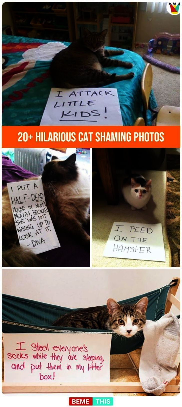 Funny Photos Of Grumpy Cat except Cute Animals To Draw Pictures so Cute Animals …,  #animal…