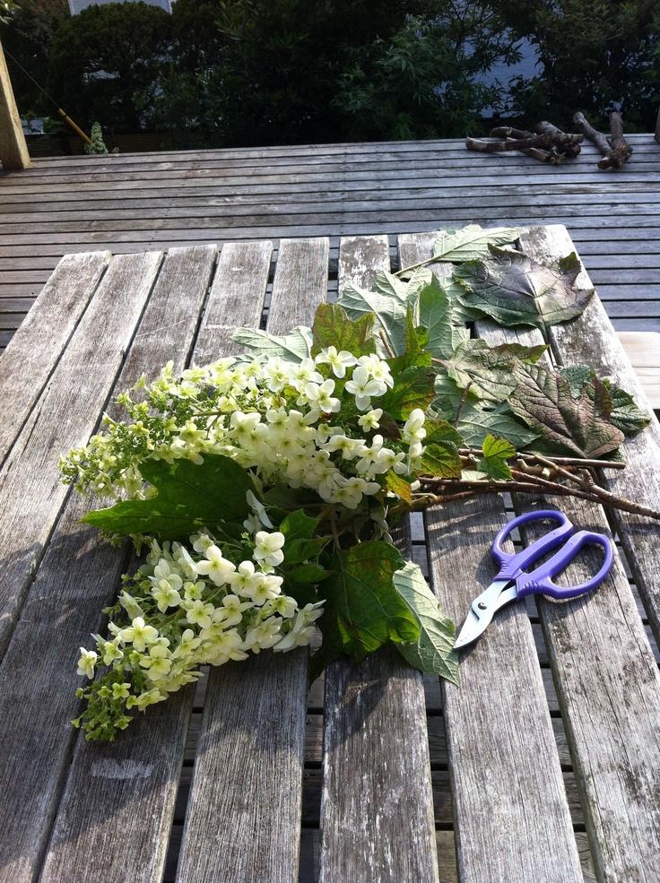 hydrangea: Gardens, Hydrangeas