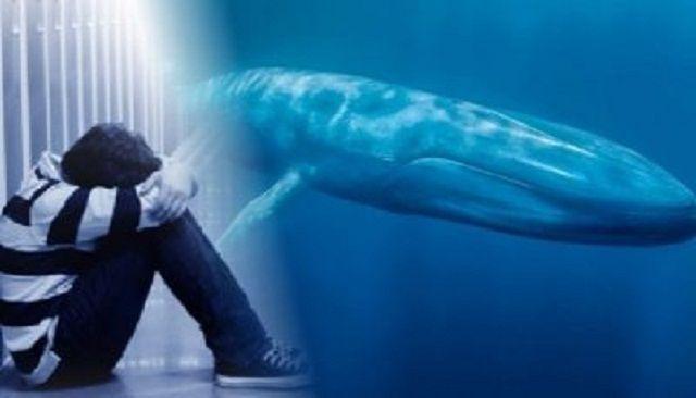 """Jaru: Aparecem novos casos da """"Baleia Azul""""; Suicídio de uma adolescente pode ter ligação com o jogo"""