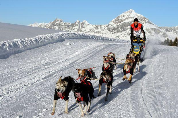 La rédaction de Côté Loisirs s'envole ce samedi pour Genève avant de rejoindre Samoëns pour couvrir le départ de la Grande Odyssée Savoie-Mont Blanc... Elle est connue et réputée pour être la course de...