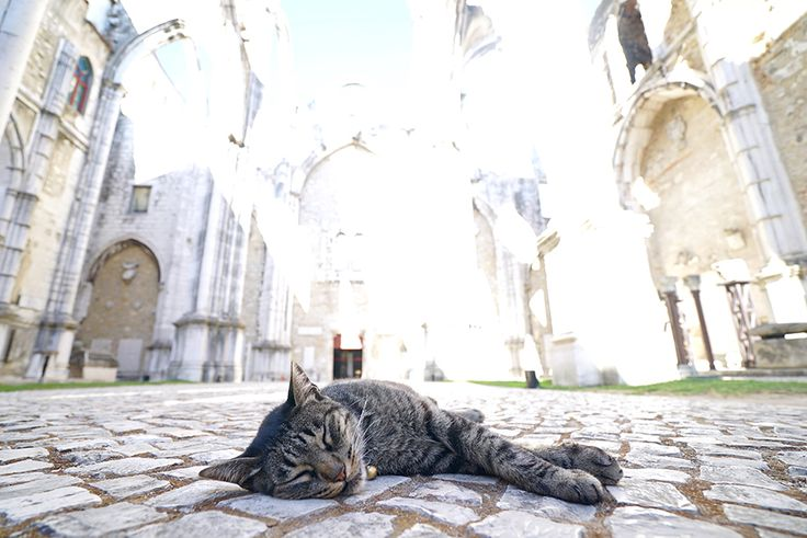 Sleeping #cat in #Lisbon