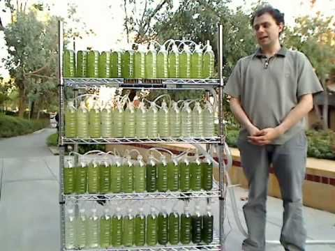 Growing your own biofuel out of algae