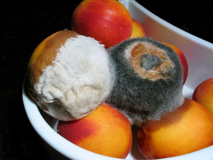 Πόσες φορές σας έτυχε τα ολόφρεσκα φρούτα σας που βρίσκονται στο ψυγείο σας να μουχλιάσουν μέσα σε πολύ λίγες ημέρες;  Σίγουρα όχι λίγες αφού όλοι την έχουμε… πατήσει. Επειδή όμως οι εποχές που διανύουμε δεν είναι