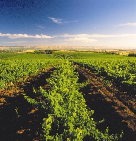 McLaren Vale vineyards South #Australia  http://www.tripadvisor.com.au/ShowForum-g255092-i697-South_Australia.html