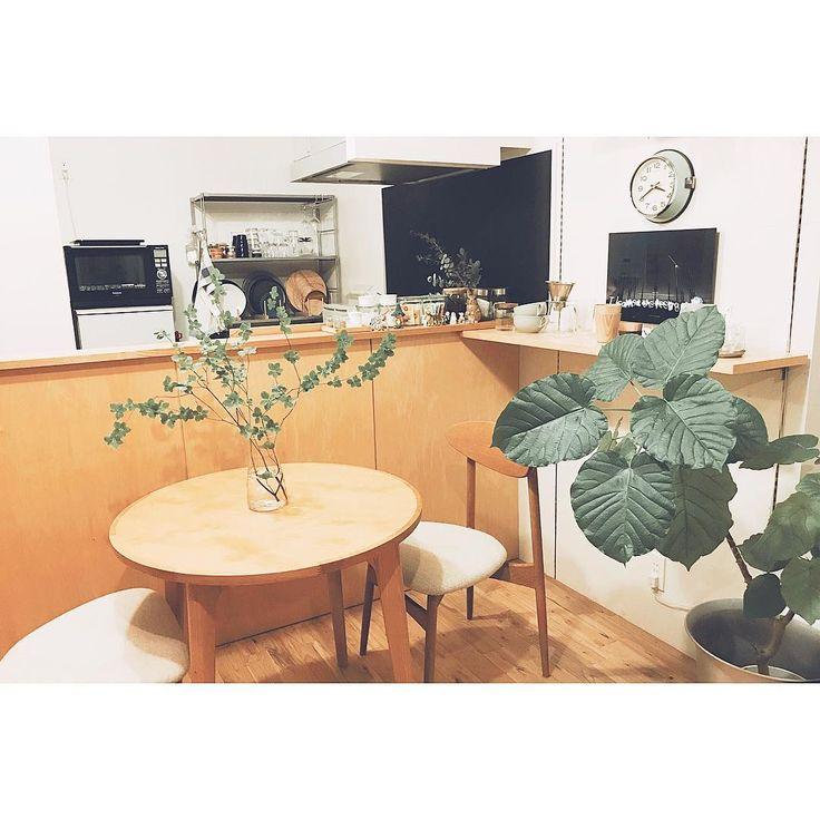 2017.08.25  .  テーブルには新入りちゃんを🌿🌿  .  ウンベラータはちょっと  おっきくなってきたな🌱  .  .  #green #interior #緑のある暮らし #暮らし #部屋 #myhome #ウンベラータ #botanical #instgood #マルニ木工 #マルニ60 #dinningroom #ダイニングテーブル #インテリア #mygoodroom
