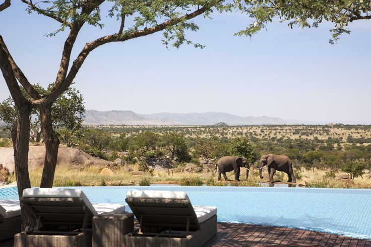 Travel to Serengeti National Park in Tanzania for the ultimate adventure honeymoon! #destination #travel #honeymoon