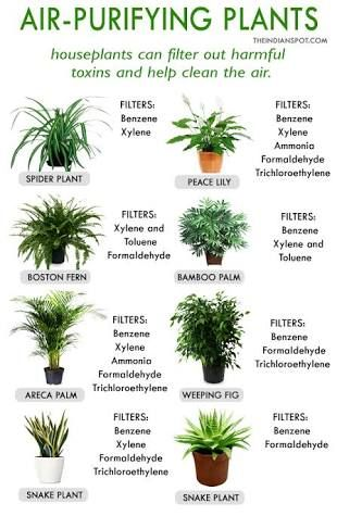 Image Result For Plants To Purify Air
