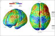 Интерактивная иллюстрация, демонстрирующая этапы созревания тканей головного мозга Различные области мозга созревают в разное время. Знание этого помогает…
