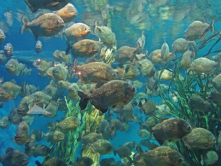 Aquarium in KLCC petronas towers  #تصويري #مدونة #سفر #سافر #مسافرون #مسافرون_العرب #مغامرات_من_الشرق__الى_الغرب  #كوالامبور #ماليزيا #حدائق #برجا_بتروناس_التوأم #حوض_سمك #اكواريوم  #easttowestadventures #travelblogger  #travelphotographer #blogger #malaysia #kualalumpur #gardens #thingstodo #thingstodoinkualalumpur #petronastowers #discoverycenter #aquarium