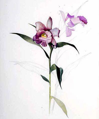 Widonid another Hiro | Plantanimais (e um tributo a Margareth Mee)