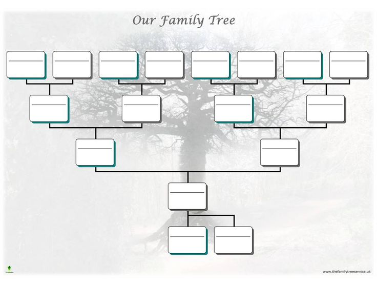Best Free Family Tree Templates Images On   Family