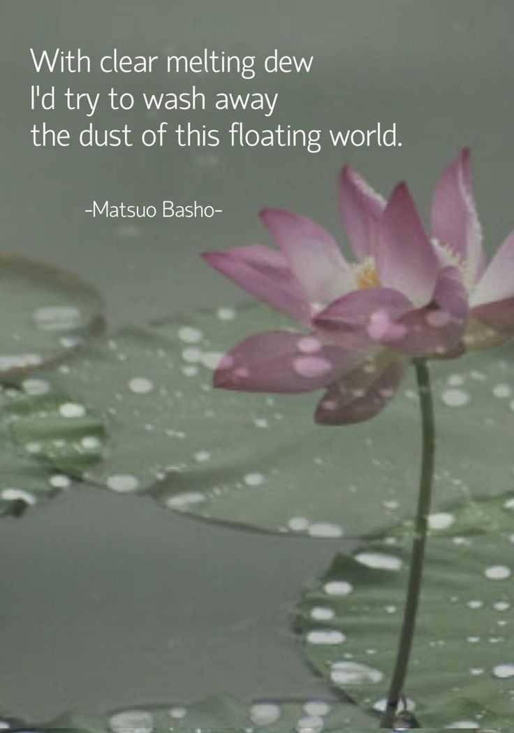 With clear melting dew I'd try to wash away the dust of this floating world. - Matsuo Basho japanese haiku poet  original image from lotusworldimages #haiku #basho