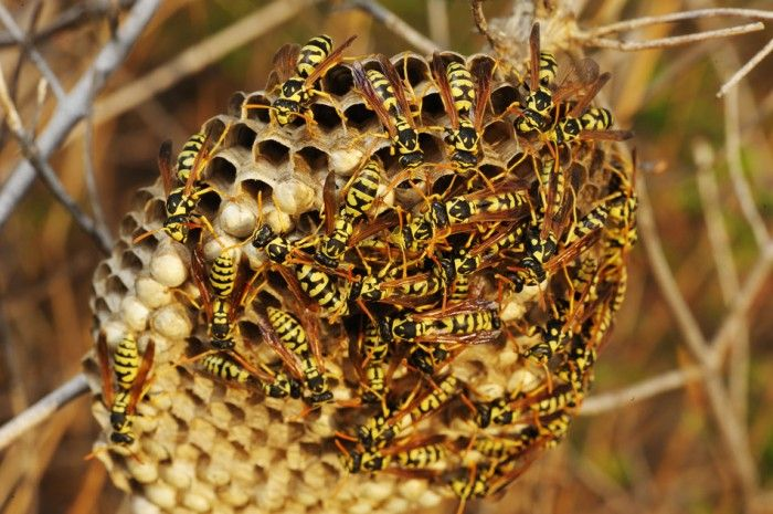 How to Get Rid of Wasps Nests? | The Housing Forum, the home, food and lifestyle center