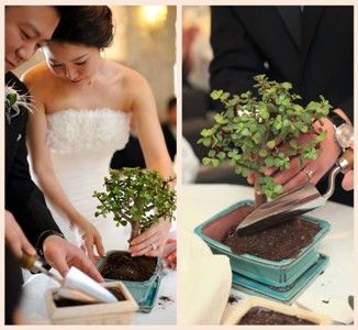 The growth of your marriage - take soil from the parents' homes & plant a tree in your backyard after your wedding [Image from Trees Ontario]