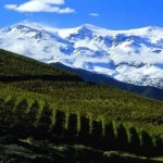 Become a Chilean Wine Expert in 120 Seconds or Less…