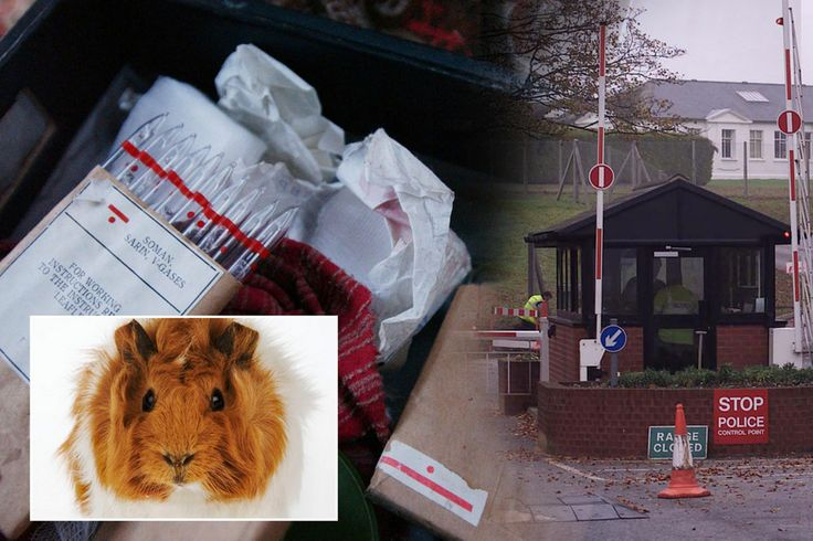 MoD gasses guinea pigs with same sarin nerve agent used by Bashar al-Assad in Syria