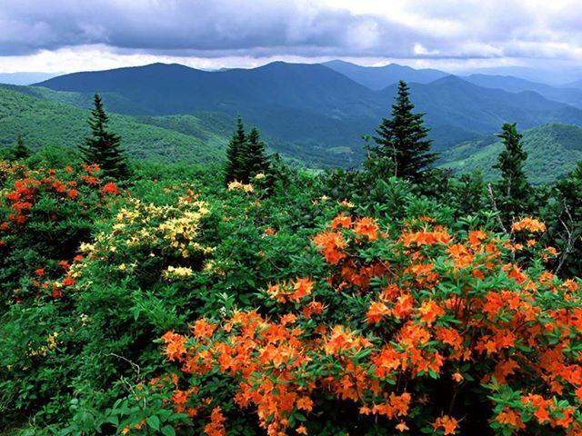 Appalachian Trail, Franklin, NC. Franklin was a fun trail town.