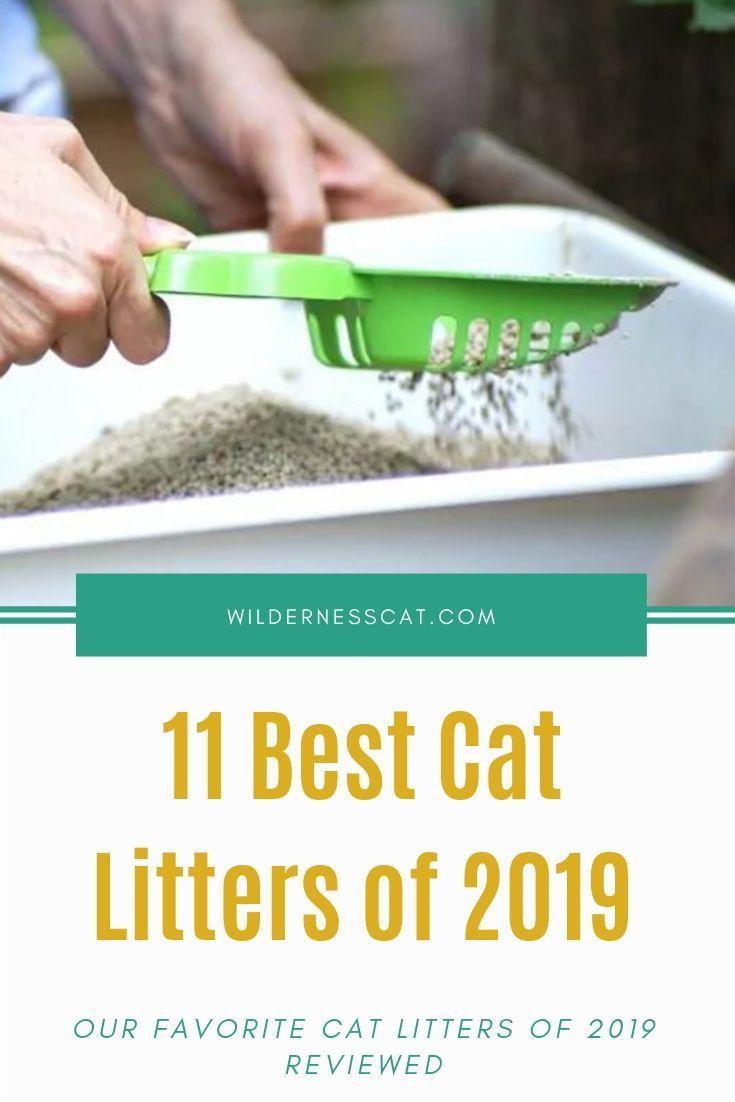 Der beste Katzenstreu der Welt: 11 beste Katzenstreu des Jahres 2019