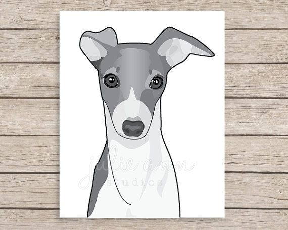 Italian Greyhound Art Print Greyhound Art by JulieAnnStudios
