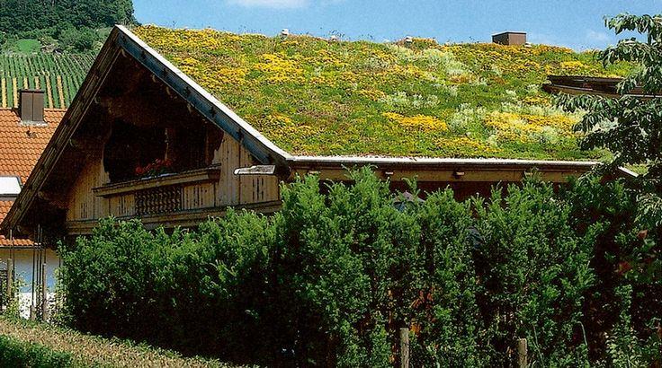 Krása zelené střechy