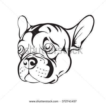 Boston Terrier Drawing 库存矢量图和矢量剪贴图 | Shutterstock