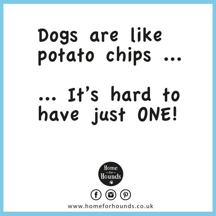 Dogs are like potato chips...  It's hard to have just one! #‎homeforhounds #‎dogdaycare #‎quoteoftheday #‎inspiration #‎doglove #‎loveyourpets #‎bestfriends #potatochips #happiness
