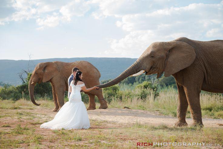 Safari Weddings in South Africa #LoveThis #SafariWeddingIdeas