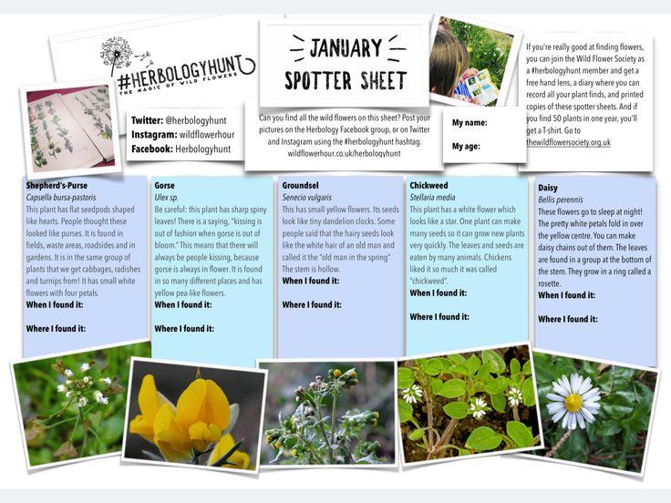 Introducing #herbologyhunt