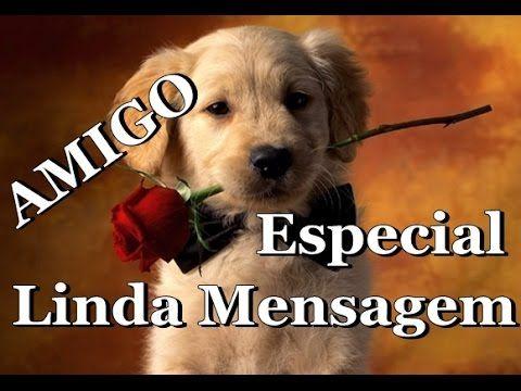 A AMIZADE - LINDA MENSAGEM DE REFLEXÃO - AMIGOS ESPECIAIS - Vídeo para WhatsApp - YouTube