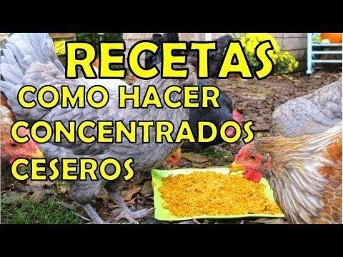 concentrado casero para gallinas ponedoras y pollos de engorde - recetas - YouTube