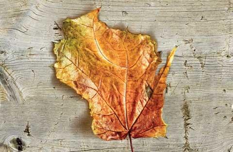 wisconsin's guide: Wisconsin 3, Fallbest Seasons, Wisconsin Leaf, Wisconsin Pride, Fall Leaves, Fall Colors, Wisconsin Fall, Fall Foliage, Wisconsin Girls