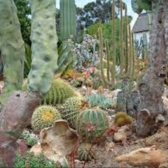 10 best water wise gardens images on pinterest for Water wise garden designs south africa