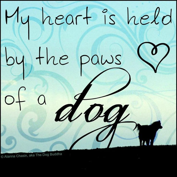 My heart is held by the paws of a dog.