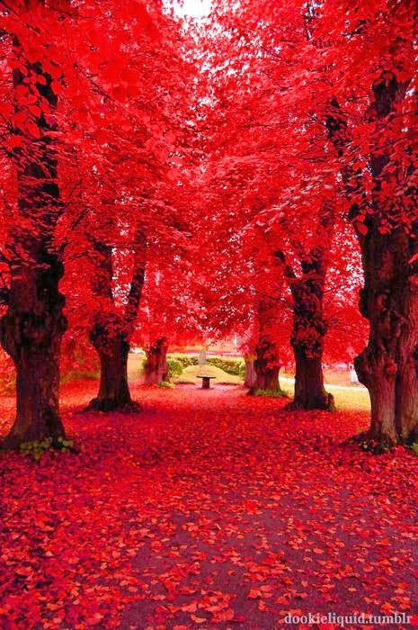 Strawberry Forest